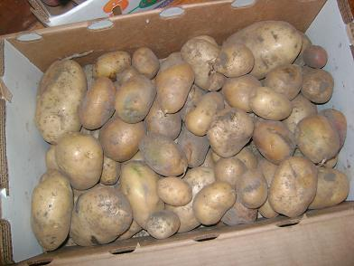potatoes09sm