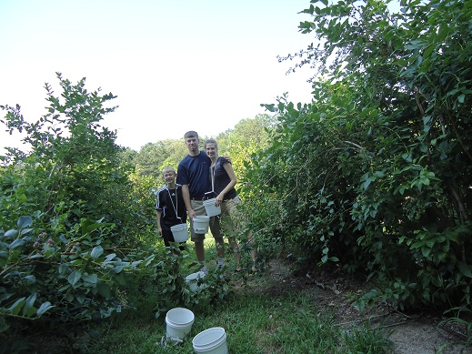 blueberry_picking_3