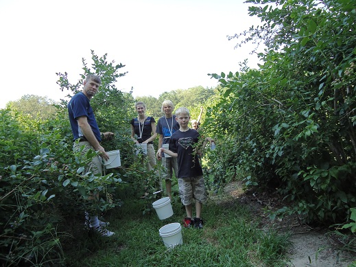 blueberry_picking_5